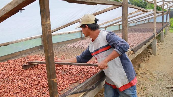 A man drying cacao beans