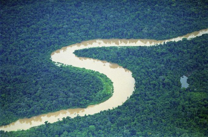 Rainforest and river