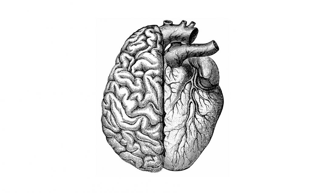 Brain and heart credit shutterstock Hein Nauwens Dana Smith