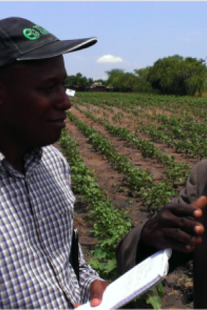 What works for smallholders and agribusiness?