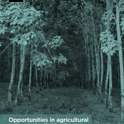 Opportunities in agricultural value chain digitisation: Learnings from Ghana