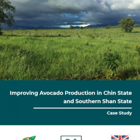 Improving Avocado Production in Chin State and Southern Shan State