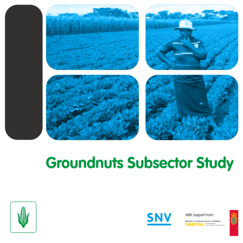 Groundnuts Subsector Study