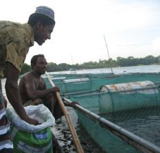 Shiblee Hatchery & Farms Cage-culture fish farming, Bangladesh