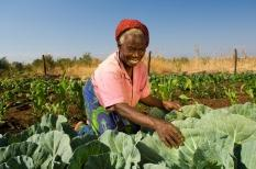Sun International Hotels, enhancing climate resilience in smallholder sourcing programmes, Zambia